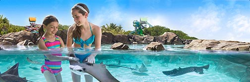 Swim with stingrays at Adventure Island water park located in Tampa Bay, Florida