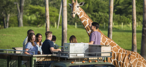 A group of people enjoy the Serengeti Safari Tour at Busch Gardens Tampa Bay, located in Florida.