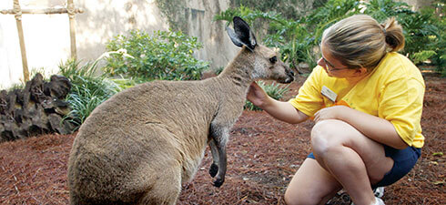 Busch Gardens Tampa Bay Summer Camps