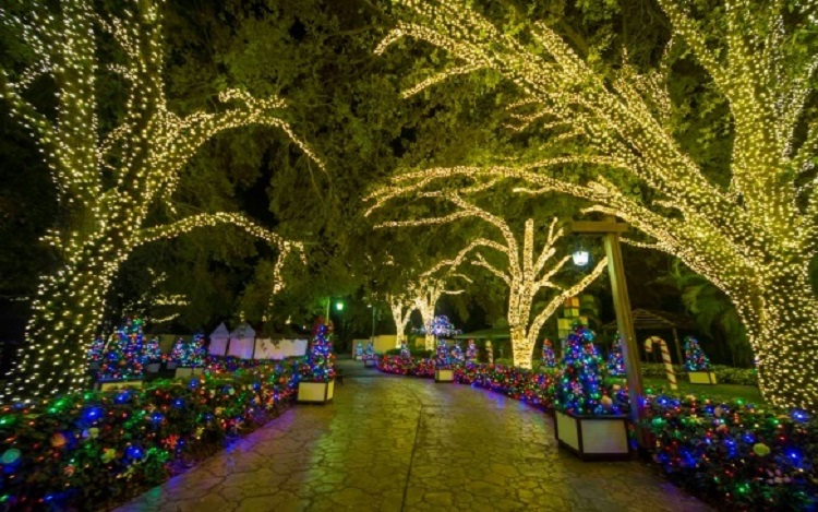 Christmas Light Path at Busch Gardens Tampa Bay