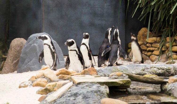 Busch Gardens Tampa Bay Penguin Blog