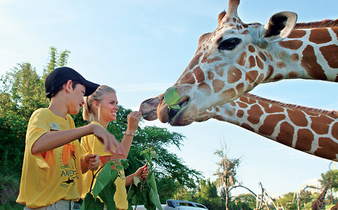 Day and Resident Summer Camps at Busch Gardens Tampa Bay