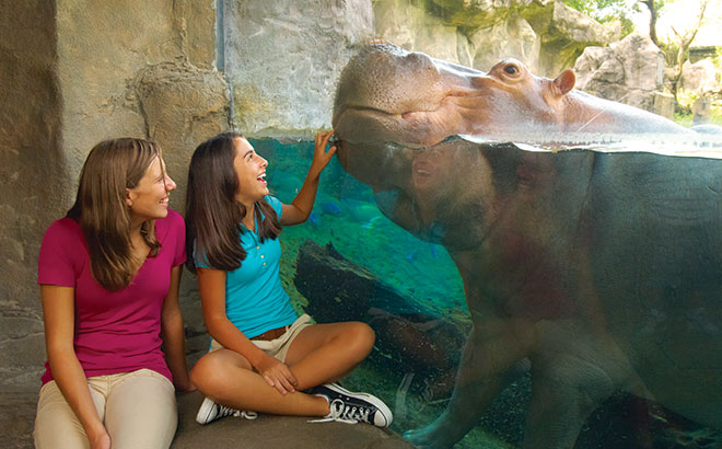 Two guests smile at a hippo at Busch Gardens Tampa Bay