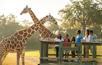 Guests at the Serengeti Safari