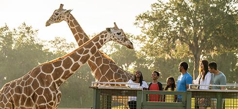 Guests on the Serengeti Safari Tour