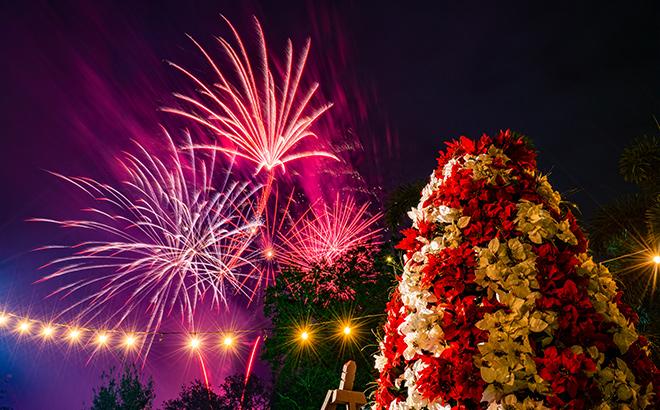 Fireworks over the Bird Gardens