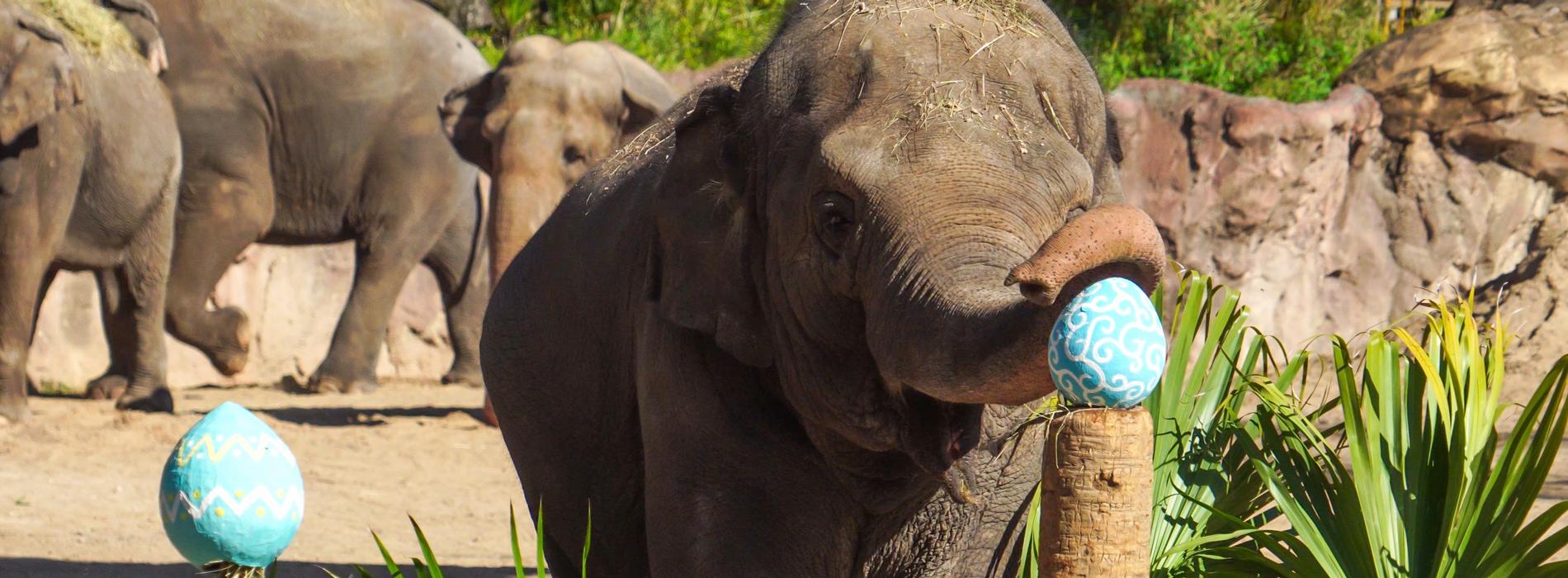 Elephant Egg Hunt Enrichment Activity