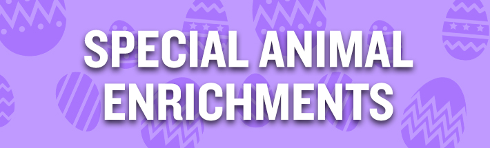 Easter  Animal Enrichments