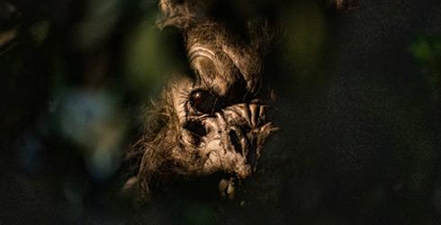 Werewolf at the Death Water Bayou