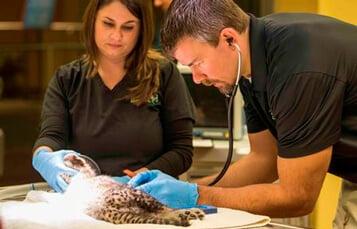 The Animal Care Center at Busch Gardens Tampa Bay