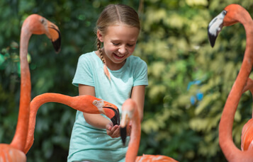 Animal Connections at Busch Gardens Tampa Bay