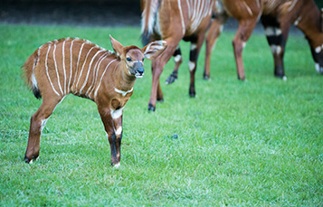 See the Bongo at Busch Gardens Tampa Bay