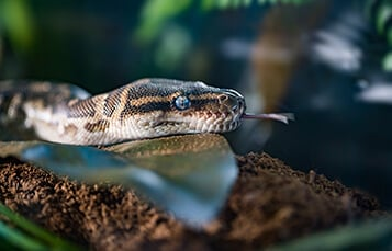 See the Snakes at Busch Gardens Tampa Bay