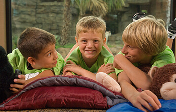 Overnight Camps at Busch Gardens Tampa Bay