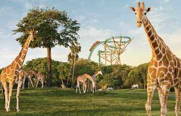 Busch Gardens® Tampa Bay offers a unique blend of world-class roller coasters, live shows and more than 12,000 animals.