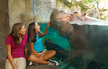 Two Busch Gardens Guests smile at a hippo