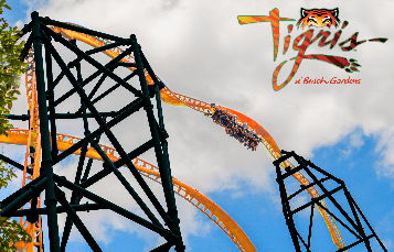 Tigris at Busch Gardens Tampa Bay