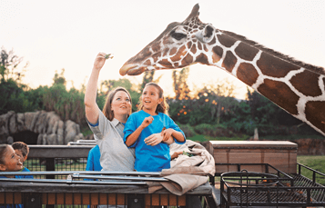 Keeper for a Day Tour at Busch Gardens Tampa Bay