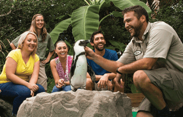 Penguin Insider Tour at Busch  Gardens Tampa Bay