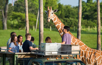 Serengeti Safari Tour at Busch Gardens Tampa Bay