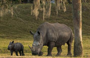 Rhino Endangered Species Tour