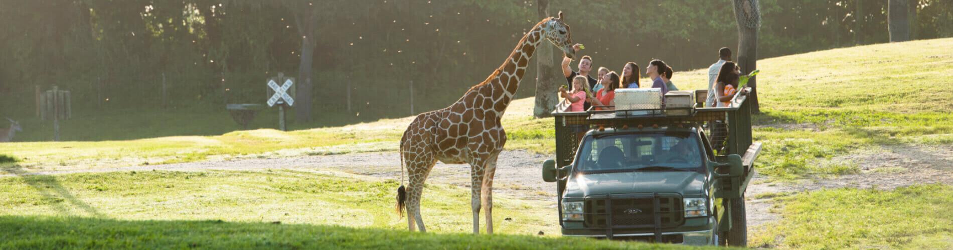 Take a Tour at Busch  Gardens Tampa Bay