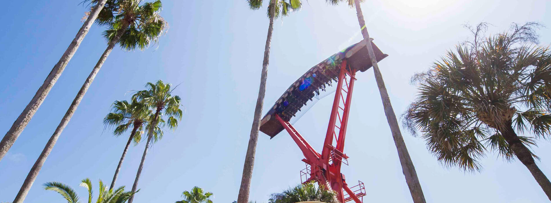 Ride the Phoenix at Busch Gardens Tampa Bay