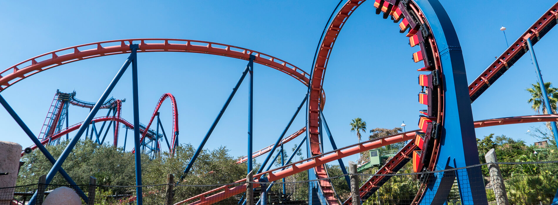Scorpion steel roller coaster, a red ride at Busch Gardens Tampa Bay, located in Florida