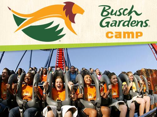 Thrill Ventures Camp at Busch Gardens Tampa Bay