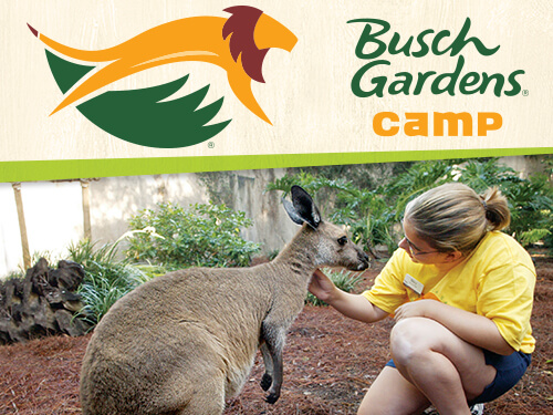 Zookeeping 101 at Busch Gardens Tampa Bay