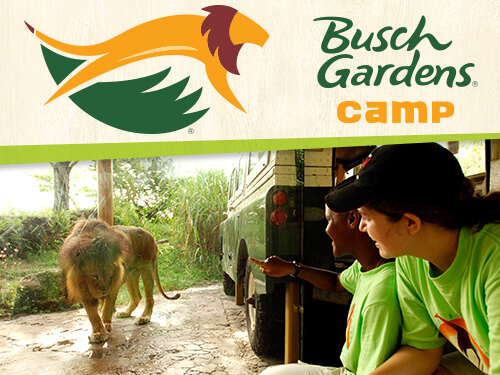 Zookeeping 201 at Busch Gardens Tampa Bay