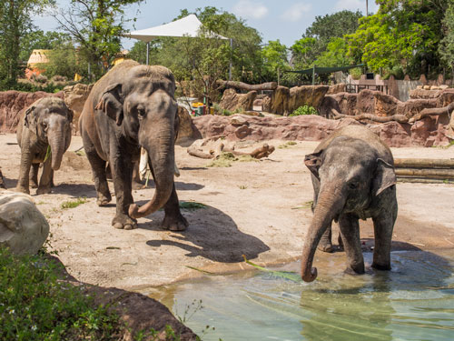 Elephant Insider Tour at Busch Gardens Tampa Bay: Go behind the scenes to meet the keepers and observe how they train and work with these incredible animals in their state-of- the-art facilities.