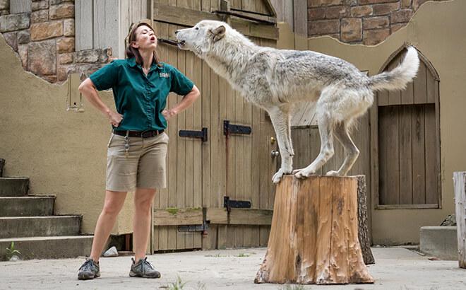 Howl to Coexist animal presenation at Busch Gardens