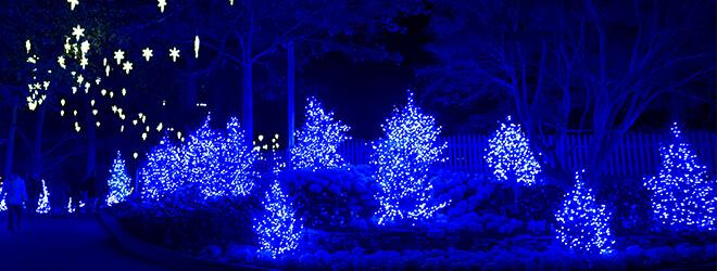 Christmas lights in Scotland at Busch Gardens Christmas event in Williamsburg, VA
