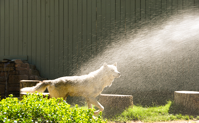 Keeping Cool in the Summer: Animal Edition
