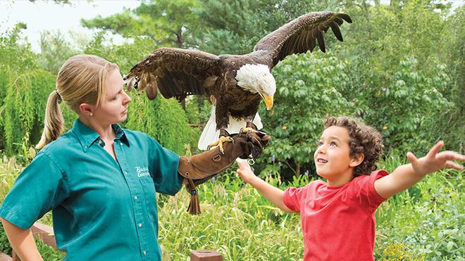 Animal Encounters at Busch Gardens Williamsburg