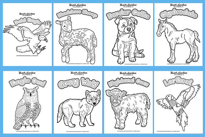 Animal Coloring Page Preview
