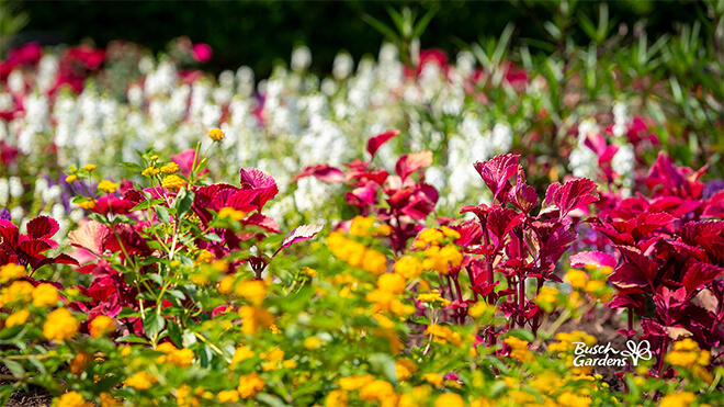 Spring Flowers Virtual Conferencing Background Preview