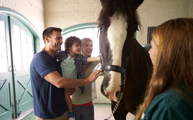Family meeting a Clydesdale horse during a tour