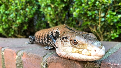 Visit our reptiles at Busch Gardens Williamsburg