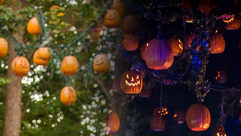 From fall decor to haunted houses, there's something to do from day to night