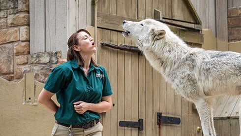 Learn about our wolves and other animals & how to coexist with them in the world