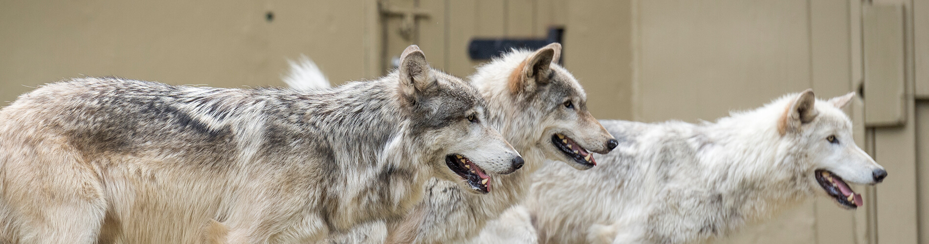 Howl to Coexist - Animal Presentation