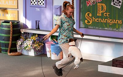 More... Pet Shenanigans - Busch Gardens Williamsburg