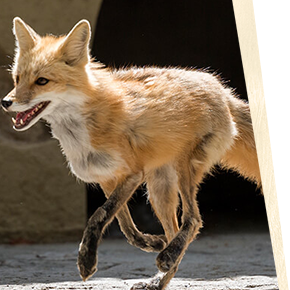 Learn about our animals at Busch Gardens Williamsburg!